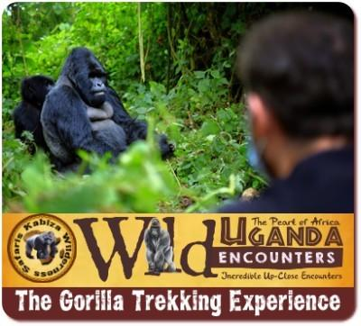 Gorilla Trekking- Rules - Guide Lines-includes Post COVID-19 SOP