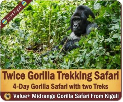 4 Day -Twice Gorilla Trekking Safari in Uganda