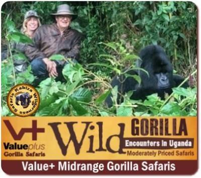 Best Gorilla Trekking Safaris