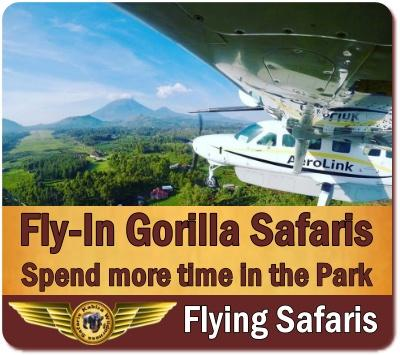 Fly-In Gorilla Trekking Safaris in Uganda