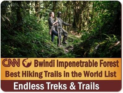 Rushaga is the Best Area for Gorilla Trekking in Bwindi Impenetrable Forest