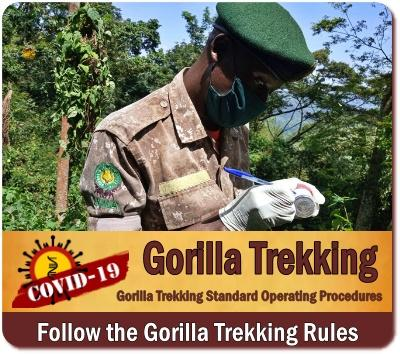 Is it SAFE to visit Mgahinga Gorilla Park in Uganda? The No Spin Reality
