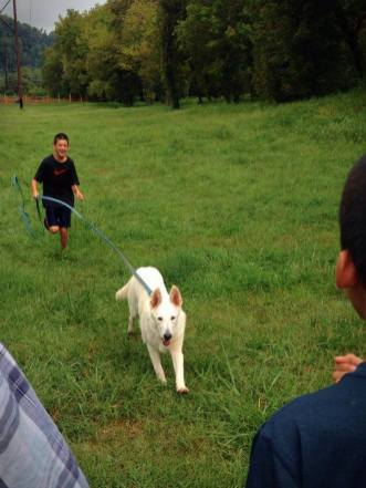 White German Shepherd Tundra and his family practicing a motivational recall request.
