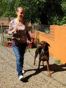 Loose leash practice with Dobie Lucy.