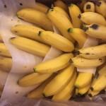 大量のバナナ画像