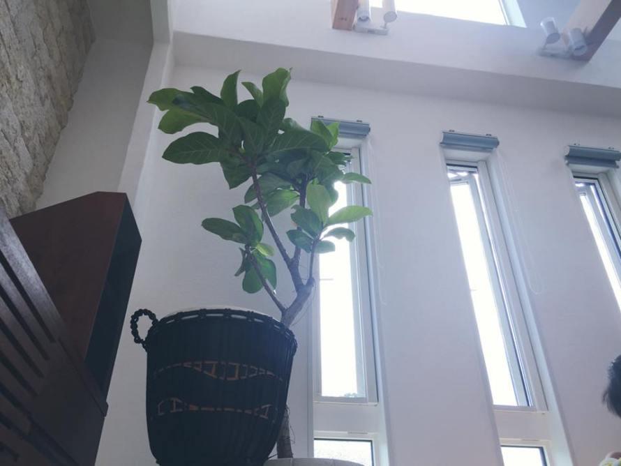箕面森町 観葉植物