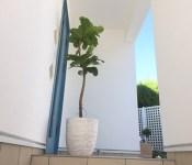 植物と自宅
