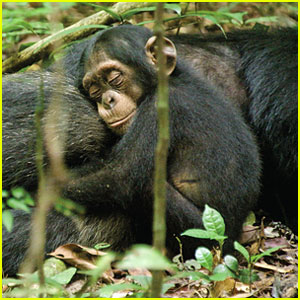 Oscar and Freddy in the movie Chimpanzee