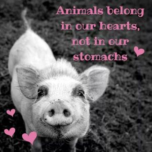 animals belong in our hearts
