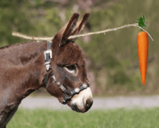 donkey and carrot