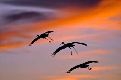 wings of a bird