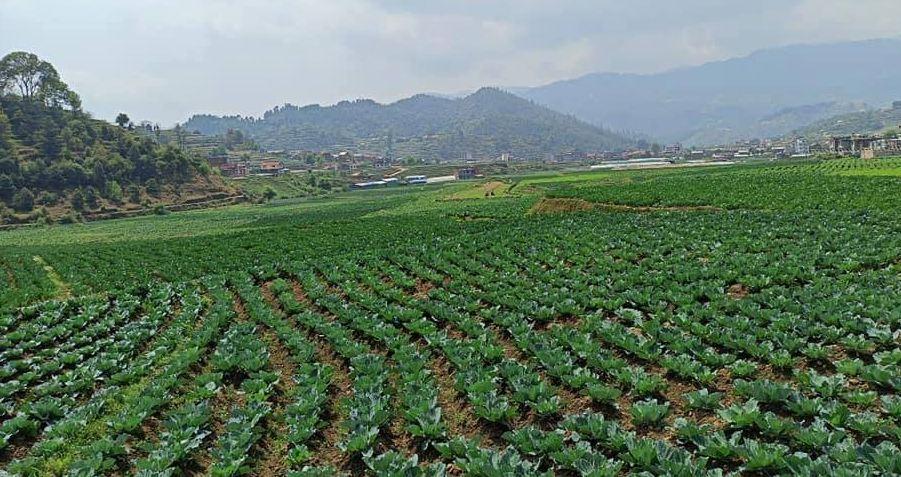 आर्थिक सुधारको लागि एक मात्र विल्कप कृषि