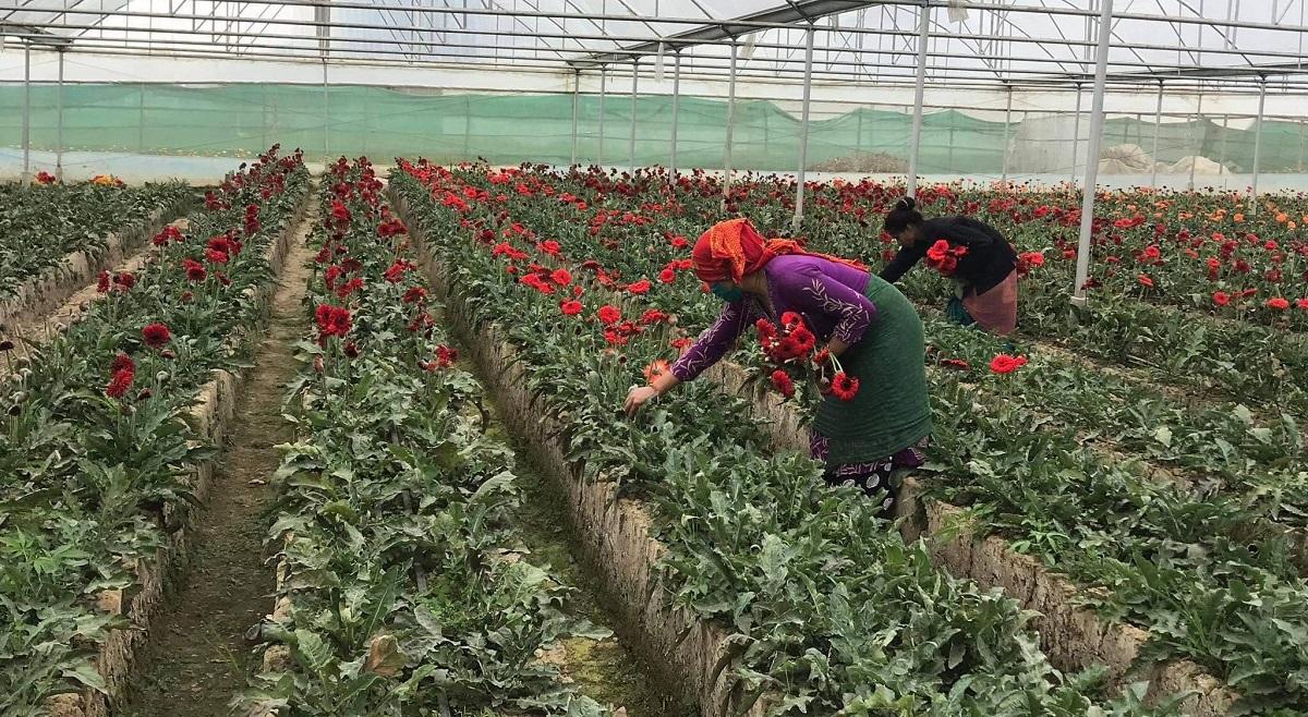फूलका थुँगा ओइलाएर झरे, तीन लाख स्वाहा