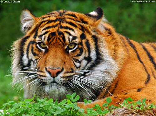 बाघबाट जोगिएर पुनर्जन्म पायौँ, सम्झँदा अहिले पनि मुटु काँपिरहेको छ