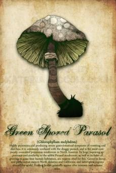 Green Spored Parasol