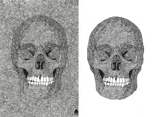 Skulls and Spirals