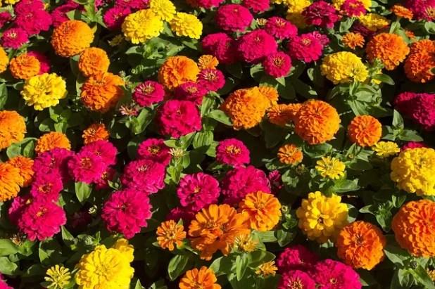 yaz çiçekleri 2