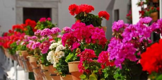 yaz çiçekleri 6