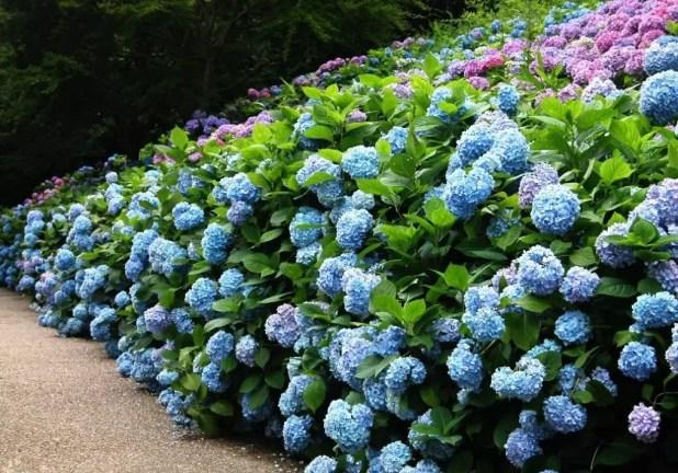 yaz çiçekleri 9