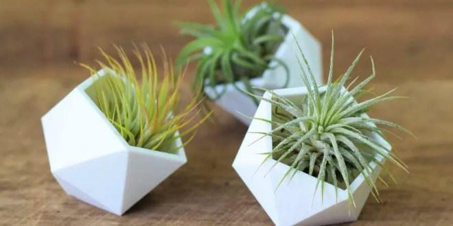 evde bakımı kolay bitki
