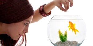 Balık Bakımında Bilinmesi Gereken Temel Kurallar