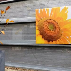 Tuinposter op 4cm frame 70x70 cm