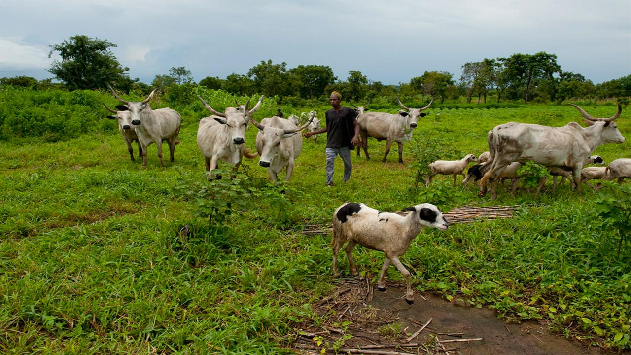grazing reserve 4