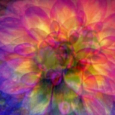 golden glowbloom image