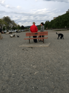 doggies2