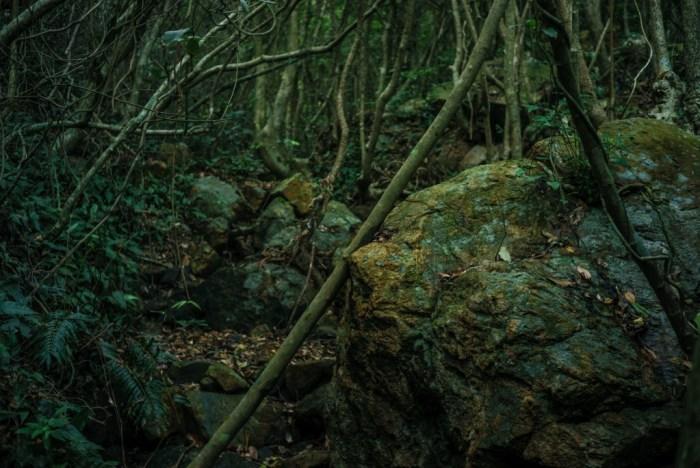 才出龙潭,又入虎穴,这一段更加深邃,枯木苍苔,乱石幽泉,好像来到了亚马逊热带丛林。