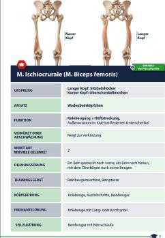 Muskelkatalog Beispielsseite