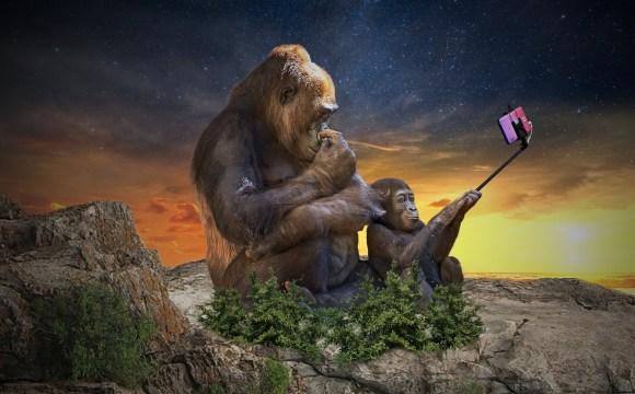 ลิงกอลิล่าสองตัว ตัวใหญ่อยู่ทางซ้าย ตัวเล็กอยู่ทางขวา กำลังนั่งถ่ายเซลฟี่อยู่ โดยตัวเล็กเป็นคนถือไม้เซลฟี่พร้อมกล้องสมาร์ทโฟน ทั้งคู่นั่งอยู่บนยอดเขา โดยมีวิวท้องฟ้าเป็นยามอาทิตย์อัสดง