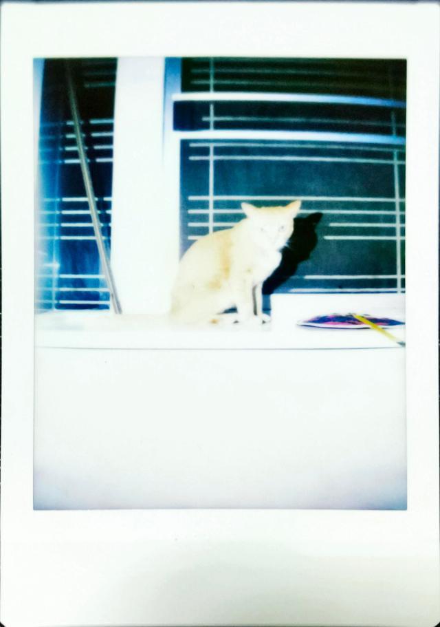 ตัวอย่างภาพถ่ายด้วย Escura Instant 60s เป็นภาพของแมวที่ยืนอยู่บนขอบผนังริมหน้าต่าง ไฟจากแฟลชทำให้ภาพออกมาสว่างจ้าเกินไป