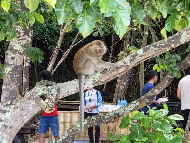 ลิงอยู่บนต้นไม้