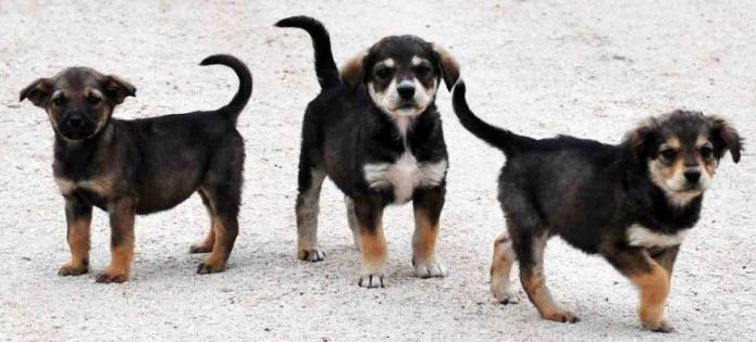 Ο Δήμος Μεγαλόπολης με εντολή Κτηνιατρικής Υπηρεσίας ελευθέρωσε τα αδέσποτα σκυλιά – Αναζητείται άμεσα λύση!