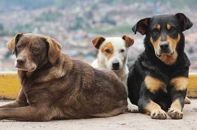 Συγκροτήθηκε η επιτροπή για την παρακολούθηση του προγράμματος διαχείρισης αδέσποτων ζώων συντροφιάς στον Δήμο Μεγαλόπολης