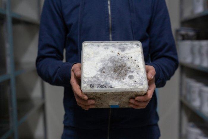 Bilde av dyrkeboks med mycel