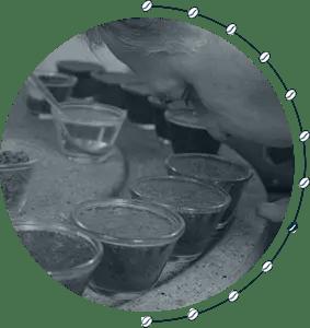 Die Kaffee-Farm 8