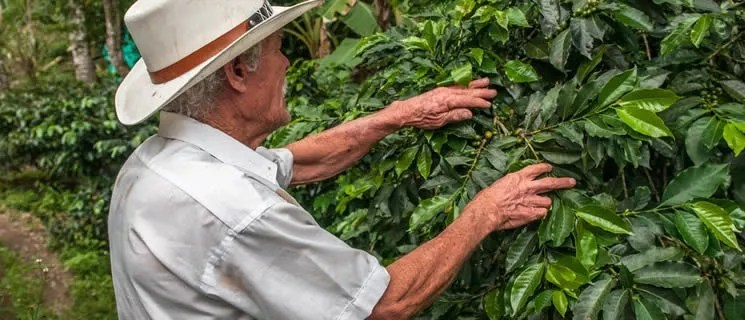 Kaffee Anbauländer