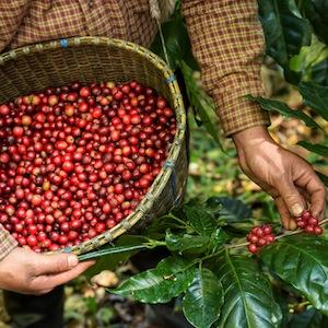 kaffeewagen hannover mobile kaffeebar kaffee wissen teaser
