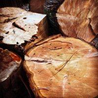 Cedar. Photo: Brett Stewart, with permission. Source: http://instagram.com/bstewart23