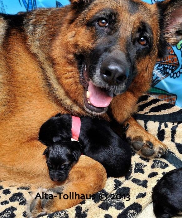 Happy mother with newborns. Source: Alta-Tollhaus.