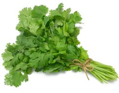 Cilantro or fresh coriander leaves in a bunch. Source: countryliving.com