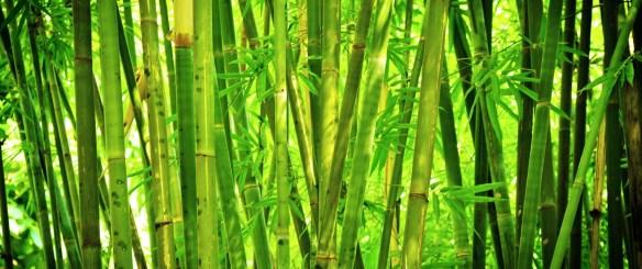 Bamboo. Source: softsheen-carson.com