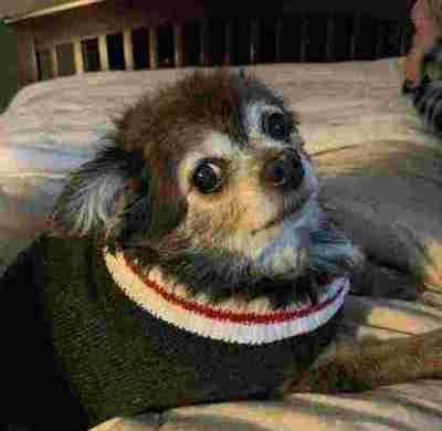 21 εικόνες σκύλων που δείχνουν ότι η αγάπη δεν έχει όριο ηλικίας  (Μέρος 2ο)