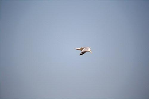 bird9d