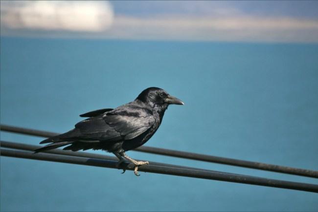 bird9e