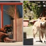 杏の里の番犬たち