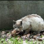 縮景園の猫