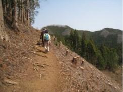 明るい切通の登山道